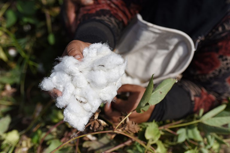 UNIDO-Egypt_Egyptian-Cotton-Project-2018_1
